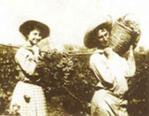 Pre State – 1848-1948 wine